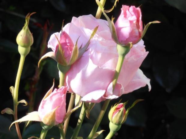 rosenwein omas hausmittel f r neue energie hilft bei abgespannheit hebt die stimmung rezept. Black Bedroom Furniture Sets. Home Design Ideas