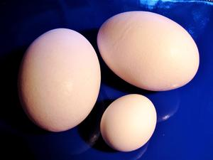 warzenhof größe pralle eier