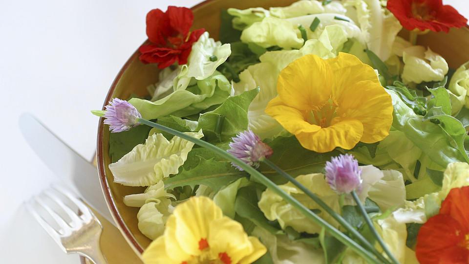 frische essbare blüten kaufen