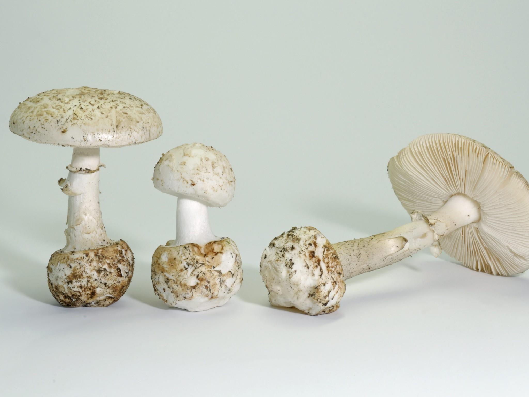 Pilze und Doppelgänger