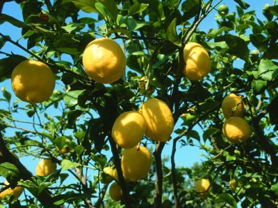 Zitronenschale: 10 tolle Tipps, damit Sie die nie wieder wegwerfen
