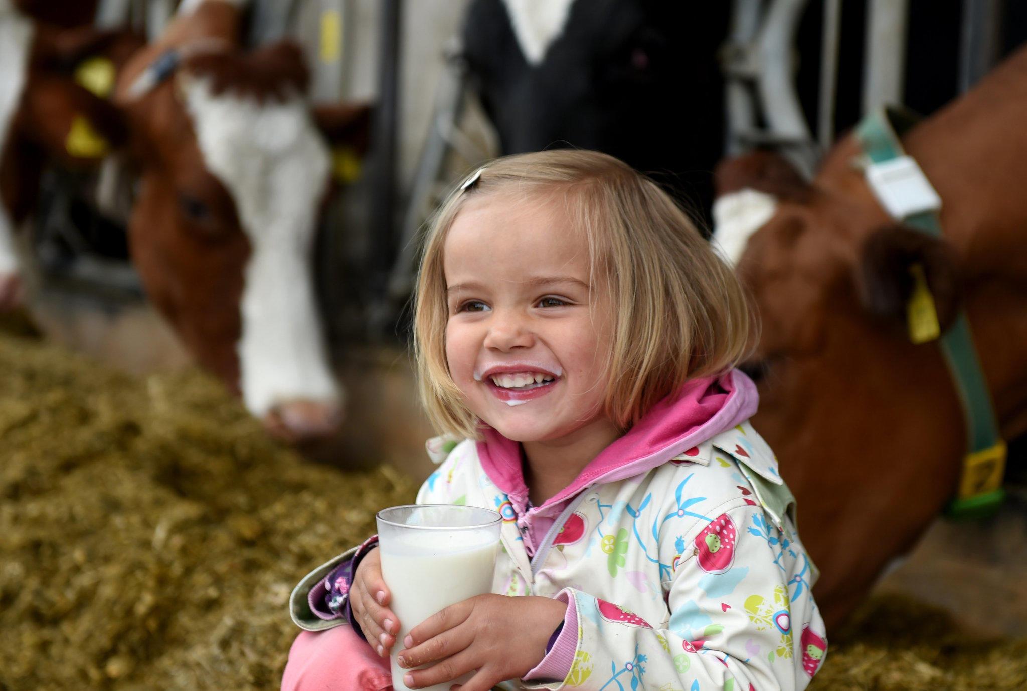 Milch-Fakten zum Tag der Milch
