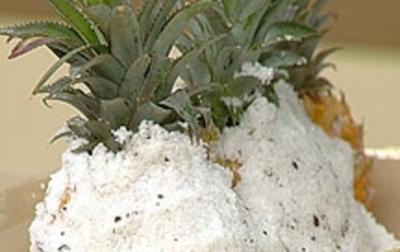 Rezept: Baby-Ananas in Salzkruste