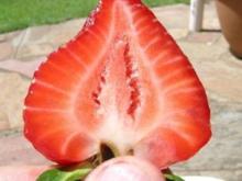 """Erdbeermarmelade """"Lehmis Geheimtip"""" - Rezept"""