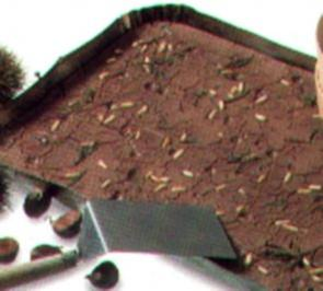 dessert kastanienkuchen - Rezept