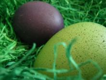 Saison, Ostern: Bunte Frühstückseier - Rezept