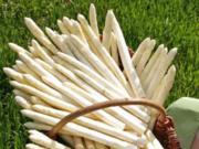 Spargel, das edelste Gemüse ganz Klassisch + TIPPS - Rezept