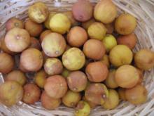 GEWÜRZ - Getrocknete Zitronen - Rezept