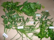 Biggi's 7 Kräuter-Pesto... - Rezept