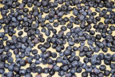 Heidelbeerkuchen  mit Streusel - Rezept