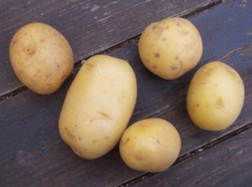 Kartoffelgratin tres bien - Rezept