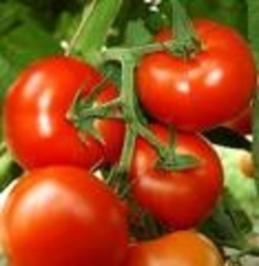 gefüllte Tomaten mit Baguette - Rezept
