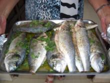 Fisch-Dorade gegrillt - Rezept