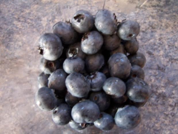 Zuchtheidelbeeren-Marmelade - Rezept - Bild Nr. 2