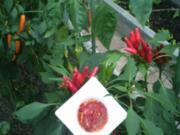 Chili Süss-Scharf - Rezept