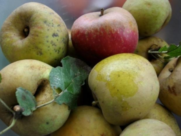 Apfel Pfannekuchen - Rezept - Bild Nr. 2