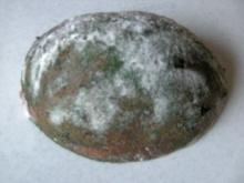 Verschimmeltes Brot - Rezept