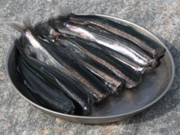 Rezept: Lodde in Maisöl