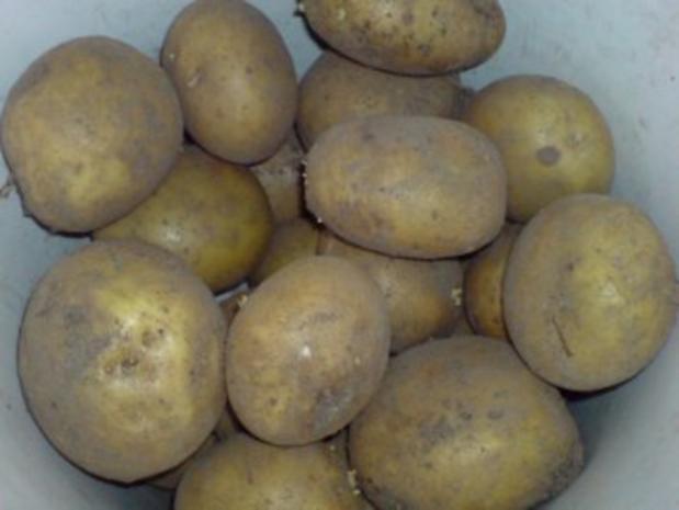 Kartoffel-Gratin - Rezept - Bild Nr. 5
