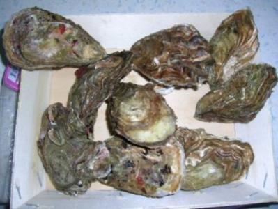 """Austern überbacken  (leider fehlt mal wieder aufgrund urlaubsbedingter """"Kocherei"""" die entsprechende Deko - Sorry - Rezept"""