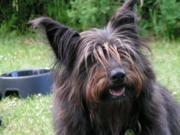 Der dicke Hund, Gesunde Mahlzeit für Hunde bis 10kg,Fellows Diät die 1. - Rezept