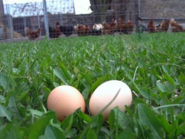 Eier auf Kräuter-Senf-Soße - Rezept - Bild Nr. 2