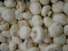 Gefüllte Riesen-Champis mit Bulgarischen Schafskäse (scharf) - Rezept