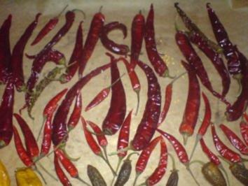 Sonstiges Peperoni trocknen - Rezept