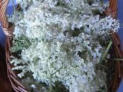 Hollunderblütensaft - Rezept