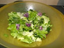Blattsalat mit viel Kräutern                (Fotos) - Rezept