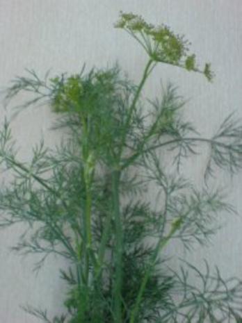 Gurkensalat - Rezept - Bild Nr. 6