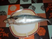Makrele (mal anders) am Spiess nach Müllerinart und Salat - Rezept
