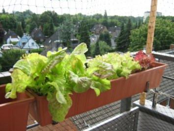 salat vom balkon rezept mit bild. Black Bedroom Furniture Sets. Home Design Ideas