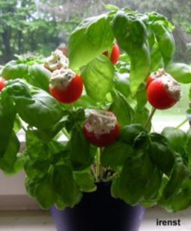Tomaten am Spieß - Rezept