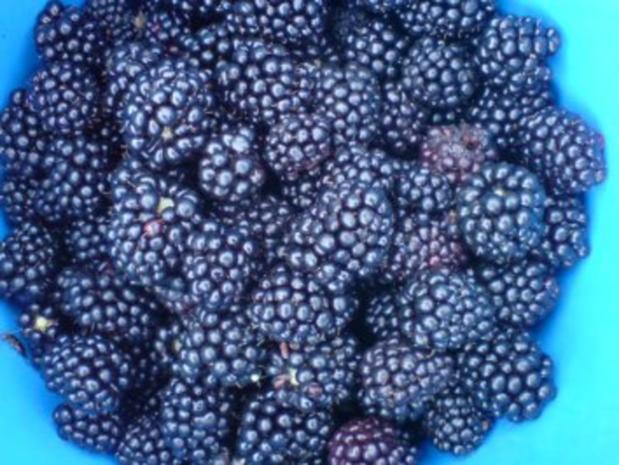 3-Frucht-Marmelade - Rezept - Bild Nr. 4
