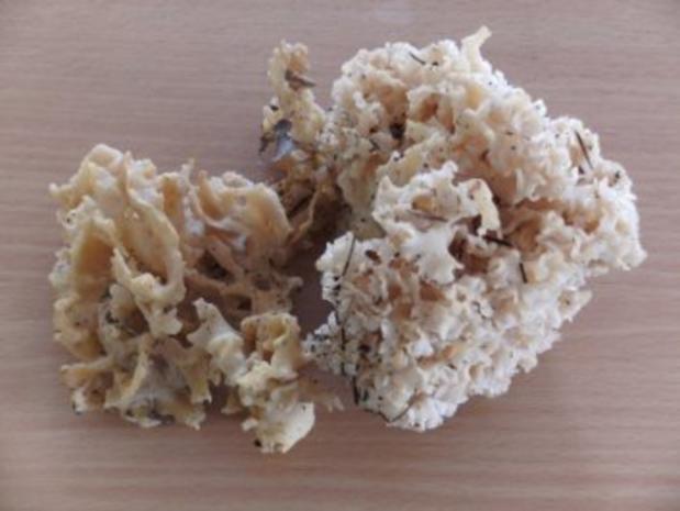 Pilze: Krause Glucke - Suppe - Rezept - Bild Nr. 2
