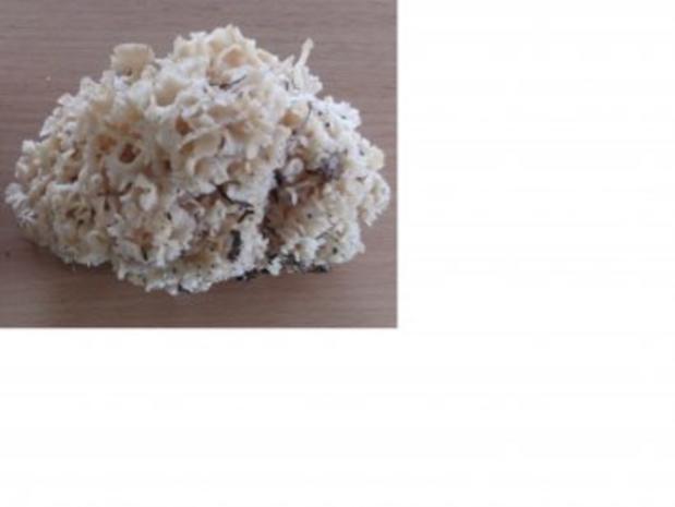Pilze: Krause Glucke geschmort - Rezept - Bild Nr. 3