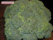Gemüse:   BROCCOLI - Rezept