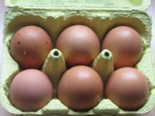 GETRÄNKE: Eiergetränk - Rezept