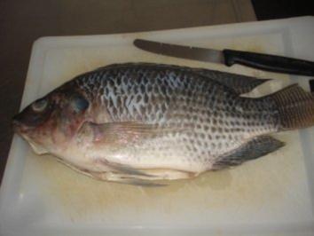 Fried Fisch aus Nigeria - Rezept