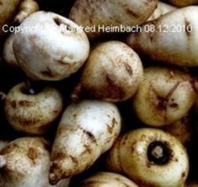 Gemüse – Kerbelrübenrösti a'la Manfred - Rezept
