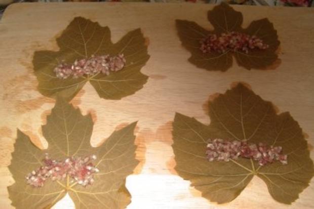 Gefüllte Weinblätter, mit Fleisch - Rezept - Bild Nr. 5