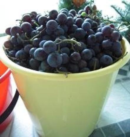Weintrauben-Gelee - Rezept - Bild Nr. 2