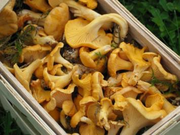 Rezept: Eierspeisen: Camembert-Omelett mit Pilzen