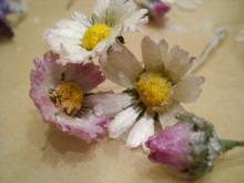 Praktisches: Kandierte Gänseblümchen - Rezept