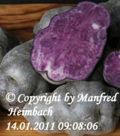 Rezept: Kartoffel – Salat von der Vitelotte – Blauer Kartoffelsalat