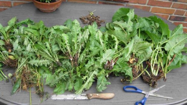 Würze für Gemüse und Salat - Rezept - Bild Nr. 3