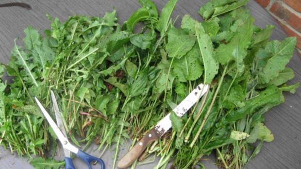 Würze für Gemüse und Salat - Rezept - Bild Nr. 5