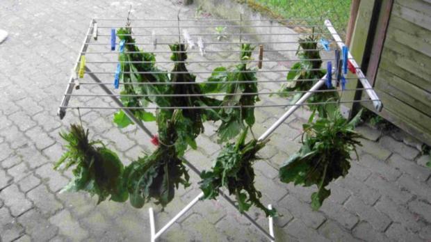 Würze für Gemüse und Salat - Rezept - Bild Nr. 7