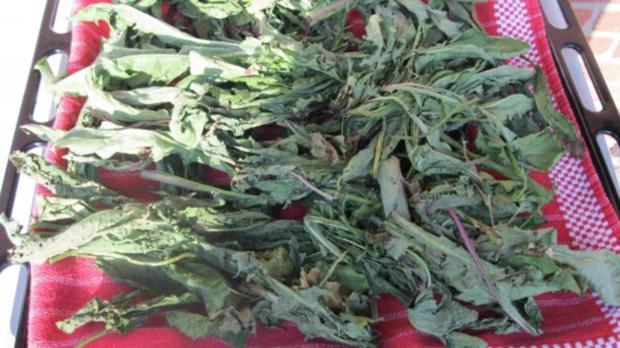 Würze für Gemüse und Salat - Rezept - Bild Nr. 8